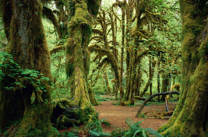 Olympic National Park, Washington - Credit: Washington Tourism Alliance
