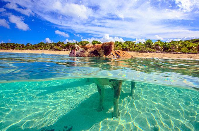 Paradise Ocean Beach Club
