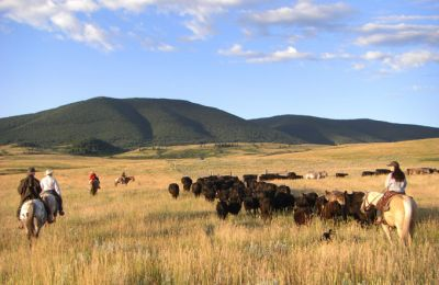 MT/Double Spear Ranch/Cattle Drive