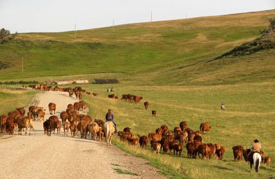AB/Lucasia Ranch/Cattle Drive 2