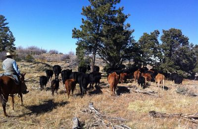 AZ/Grand Canyon Ranch & Outfitters/Cattle Drive II