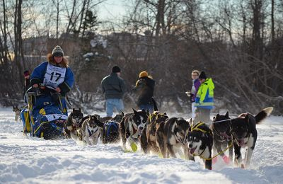 Artic Range Adventure/Yukon Quest Dog sledding/Hundeschlitten