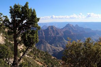 AZ/Grand Canyon/North Rim/Landschaft 4